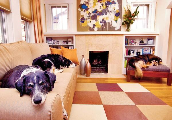 Pet Friendly Floors and Furniture