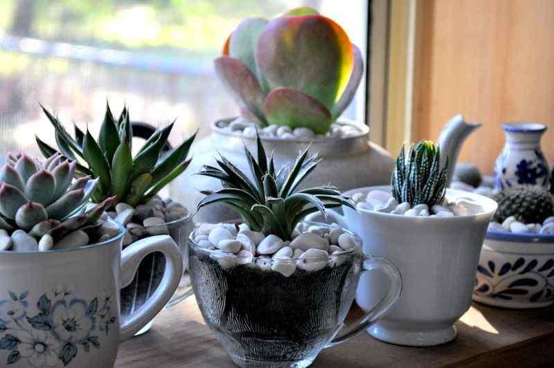 Natural Brew pot design