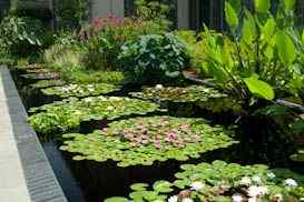 Aquatic Bloom garden design idea